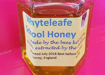 Whyteleafe School extracting honey