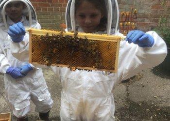 Bee Club